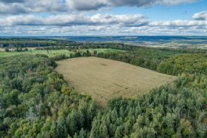 Back Field & Woodlands - Country homes for sale and luxury real estate including horse farms and property in the Caledon and King City areas near Toronto