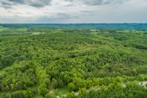 Mulmur Woodlot, Near Mansfield - Country homes for sale and luxury real estate including horse farms and property in the Caledon and King City areas near Toronto