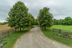 Tree-lined Drive - Country homes for sale and luxury real estate including horse farms and property in the Caledon and King City areas near Toronto